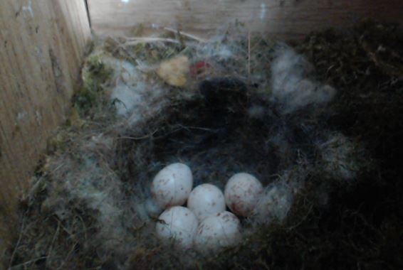 Am 24.05. schon 5 Eier